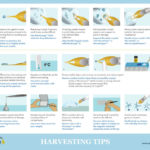 Harvesting Tips Poster full